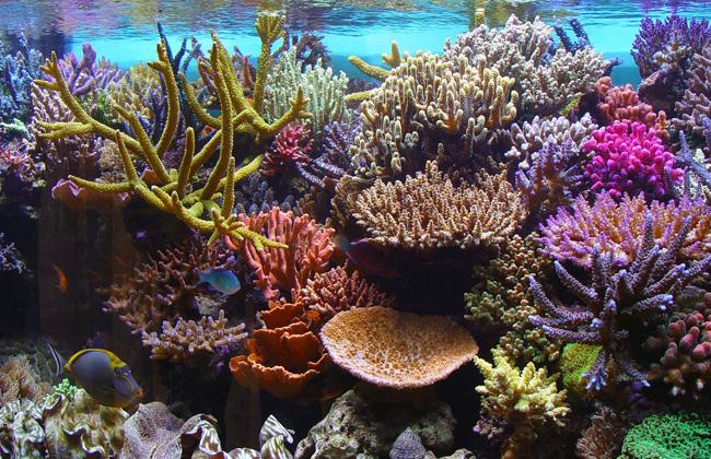 دراسة غطاء الشعاب المرجانية تقلص للنصف بسبب تغير المناخ