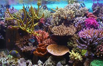 دراسة-غطاء-الشعاب-المرجانية-تقلص-للنصف-بسبب-تغير-المناخ