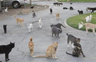 إندونيسية تحول منزلها إلى ملجأ لأكثر من 250 من قطط الشوارع