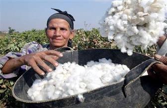 """""""الفلاحين"""" تطالب الزراعة بالتراجع عن قرار تحديد سعر قنطار القطن"""
