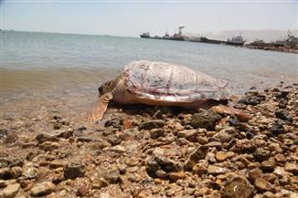 وزيرة البيئة تشيد بوعي المواطنين بأهمية الحفاظ على الحياة البحرية | صور