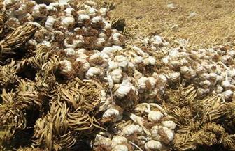 وزير الزراعة يعلن فتح السوق الأندونيسية لمحصول الثوم المصري