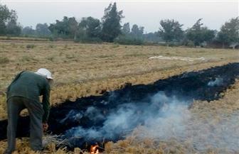 """""""بيئة وسط الدلتا"""": تحرير 122 محضرا لمزارعين بسبب حرق قش الأرز بالغربية"""