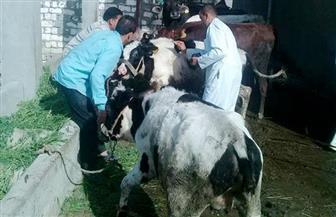 بدء الحملة الثانية لتحصين الثروة الحيوانية ضد الحمى القلاعية والوادي المتصدع بأسوان