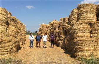 جمع 895 طن قش أرز مع بداية موسم الحصاد بالغربية| صور