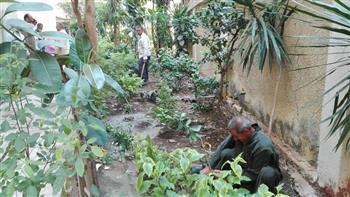 أحياء القاهرة تراجع الأشجار تزامنا مع موجة الطقس السيئ حرصا على سلامة المواطنين