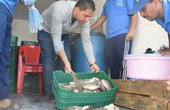 طرح أسماك بأسعار مخفضة للمواطنين بالغردقة  صور