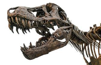 اكتشاف حفرية لجمجمة تمساح في شمال شرقي الصين