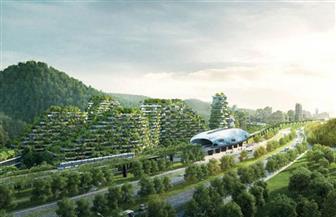 فقط فى الصين.. غابة شجرية فى كل حى من أحياء بكين