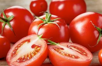 """مركز البحوث الزراعية يكشف حقيقة """"الطماطم المسمومة"""""""