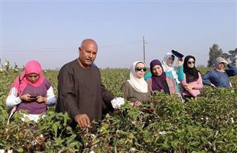 محافظة دمياط تشهد الاحتفال بيوم حصاد القطن في كفر سعد | صور