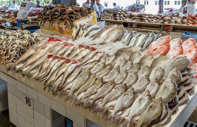 000fab1b6 مبادرة لإطلاق أول سوق سمك أون لاين في مصر - بوابة الأهرام