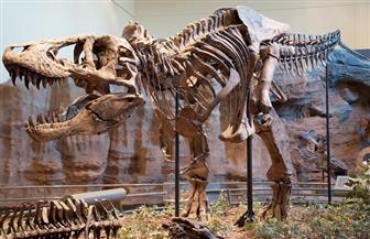 """الصين تكتشف """"حفريات"""" ديناصورات عملاقة تعود لـ130 مليون سنة"""