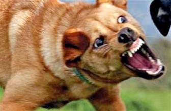 """""""الخدمات البيطرية"""": 70 حالة وفاة بسبب """"داء الكلب"""" في 2018"""