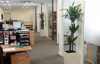 النباتات مفيدة لبيئة العمل وتقلل التوتر وتخفض ضغط الدم