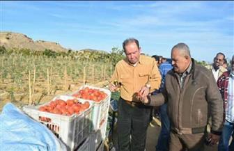 """وفد شركة الريف المصري يزور مزرعة """"وادي القويح"""" بالقصير   صور"""