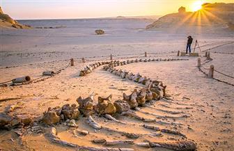 الاتحاد الدولي لصون الطبيعة يشيد عالميا بموقع وادي الحيتان والقائمين عليه