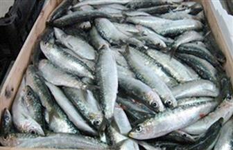ضبط 1193 عبوة من أسماك سالمون منتهية الصلاحية بالإسكندرية