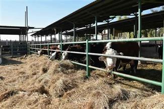 تقرير للمكتب الفني يكشف: عدم تحديث سلالة مشروع إنتاج الألبان واللحوم بسوهاج وتوقف المزرعة   صور