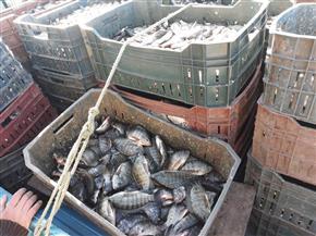 ضبط 6 أطنان أسماك فاسدة قبل طرحها في أسواق البحيرة | صور