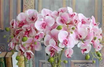 زهور السحلبية الصغيرة تحظى بشعبية بين عشاق النباتات