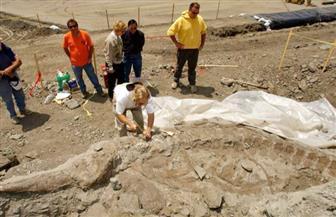 باحثون يعثرون على آثار حيتان صغيرة في أمعاء حوت عاش قبل 35 مليون سنة