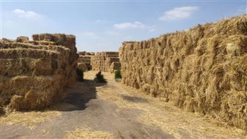 تأسيس أول شركة مصرية لتحويل قش الأرز إلى ألواح خشبية متوسطة الكثافة