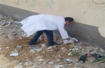 «بيطري شمال سيناء» يشن حملة للتخلص من الكلاب الضالة بحي العبور | صور