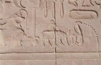 بعد موت آخر فيل إفريقي بحديقة الحيوان بالجيزة.. هذه حكاية الأفيال على نقوش المعابد الفرعونية| صور
