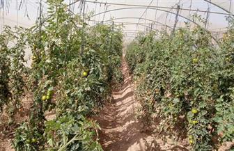 """في جنوب سيناء.. التجمعات البدوية تحولت إلى زراعية وإضاءة """"أبوغراقد"""" بالطاقة الشمسية.. وإقامة منحل على 10 أفدنة"""