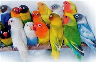 طيور الزينة ممنوعة من دخول مصر.. وخبراء يكشفون الأسباب