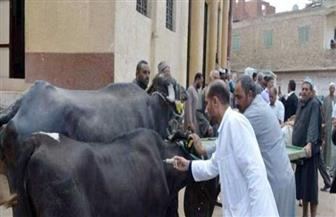 تحصين 46 ألف رأس ماشية من طاعون المجترات بالدقهلية