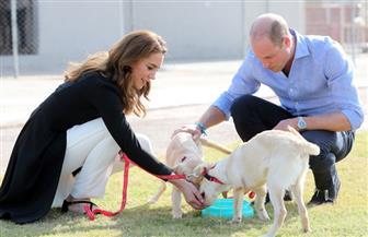 الأمير ويليام وزوجته كيت يزوران مركزا لتدريب الكلاب فى باكستان | صور