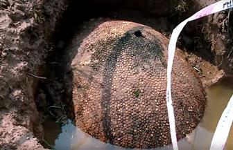 العثورعلى صدفة حيوان يعود إلى 10 آلاف عام في الأرجنتين | فيديو