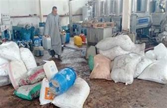 مركز بحوث الصحراء: عصر محصول الزيتون بـ60 قرشا للكيلو لدعم مزارعي مطروح