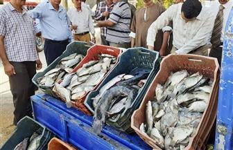 ضبط 560 كجم أسماك ولحوم غير صالحة للاستهلاك الآدمي قبل بيعها للمواطنين بسوهاج | صور