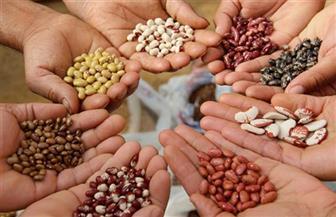 """""""الزراعة"""" تعلن أسعار تقاوى محاصيل الموسم الصيفي الجديد دون زيادة عن العام الماضي"""