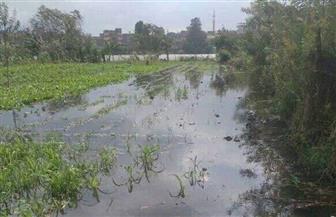 الأمطار تتسبب في ارتفاع منسوب النيل بالغربية