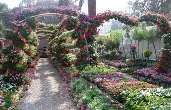 """بمشاركة ١٧٠ شركة عارضة.. """"الزراعة"""" تفتتح النسخة الأولى من معرض زهور الخريف السبت المقبل"""