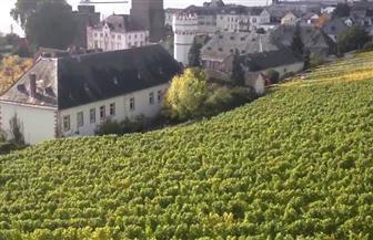 بسبب الحرارة العالية وقلة المياه.. مزارعو الكروم في ألمانيا يشكون من قلة الإنتاج