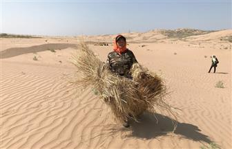 صحراء نينجشيا .. كيف تحارب لؤلؤة الصين الخضراء التصحر بسلاح الصبر| صور