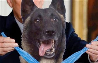 """سعر فصيلة كلب """"عملية البغدادي"""" يتضاعف 5 مرات بعد نشر صورته"""