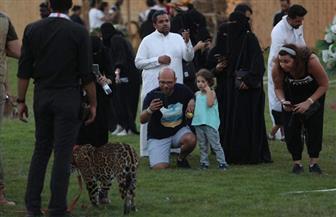 ضيوف موسم الرياض يواجهون الأسد الإفريقي والنمر الذهبي في سفاري | صور
