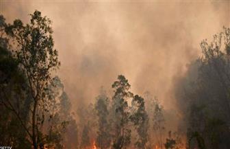 أستراليا تحاول احتواء حرائق الغابات وتستعد للأسوأ