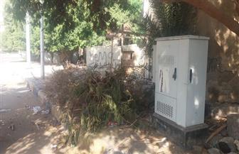 حملات مكثفة لرفع المخلفات وعزل الكابلات الكهربائية في عدة مناطق بالغردقة| صور