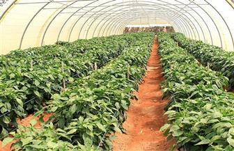 مصر تعرض مشروعاتها أمام ملتقى الزراعيين بدول تجمع الصحراء والساحل