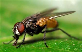 تعرف على حقيقة انتشار حشرات ناقلة للأمراض قادمة من الحدود الجنوبية