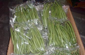"""""""التصديري للصناعات الغذائية"""" يبحث زيادة صادرات الفاصوليا الخضراء"""