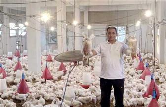 جامعة العريش تبيع دجاج مزرعتها بأسعار مخفضة غدا.. تعرف على أماكن البيع| صور