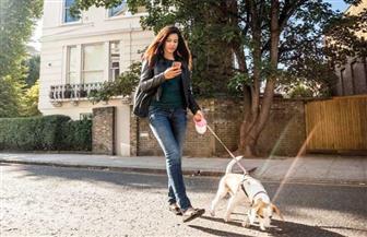 لماذا يضر إدمان الهواتف الذكية بكلبك؟